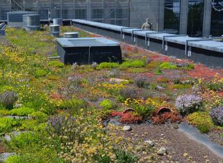 Bilan du cours pratique sur les toits verts à Lausanne 31.5.21