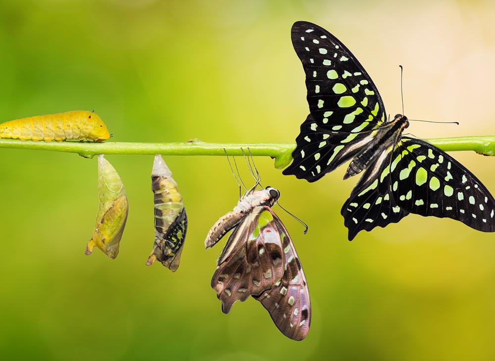 La grande transformation – juste un slogan ?
